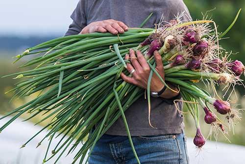lopez island helens farm vegetables