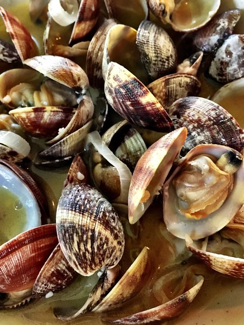 fresh seafood clams lopez