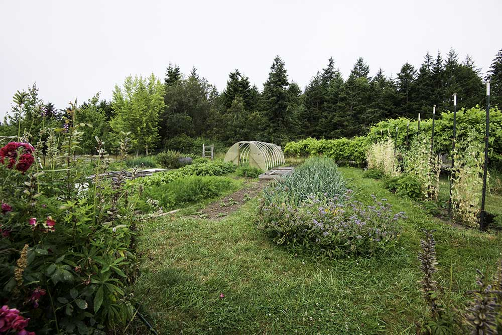 lopez island S&S Farm organic farming vegetables orchard fruit