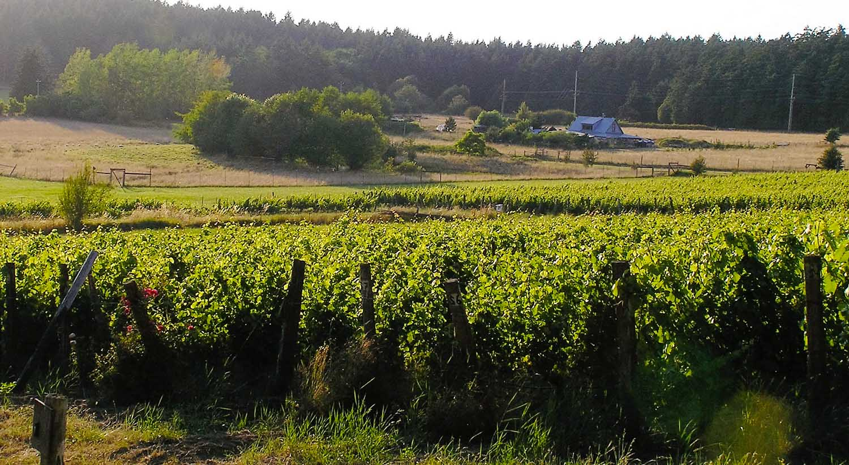 lopez island wine wines vintage winery vineyard organically grown organic