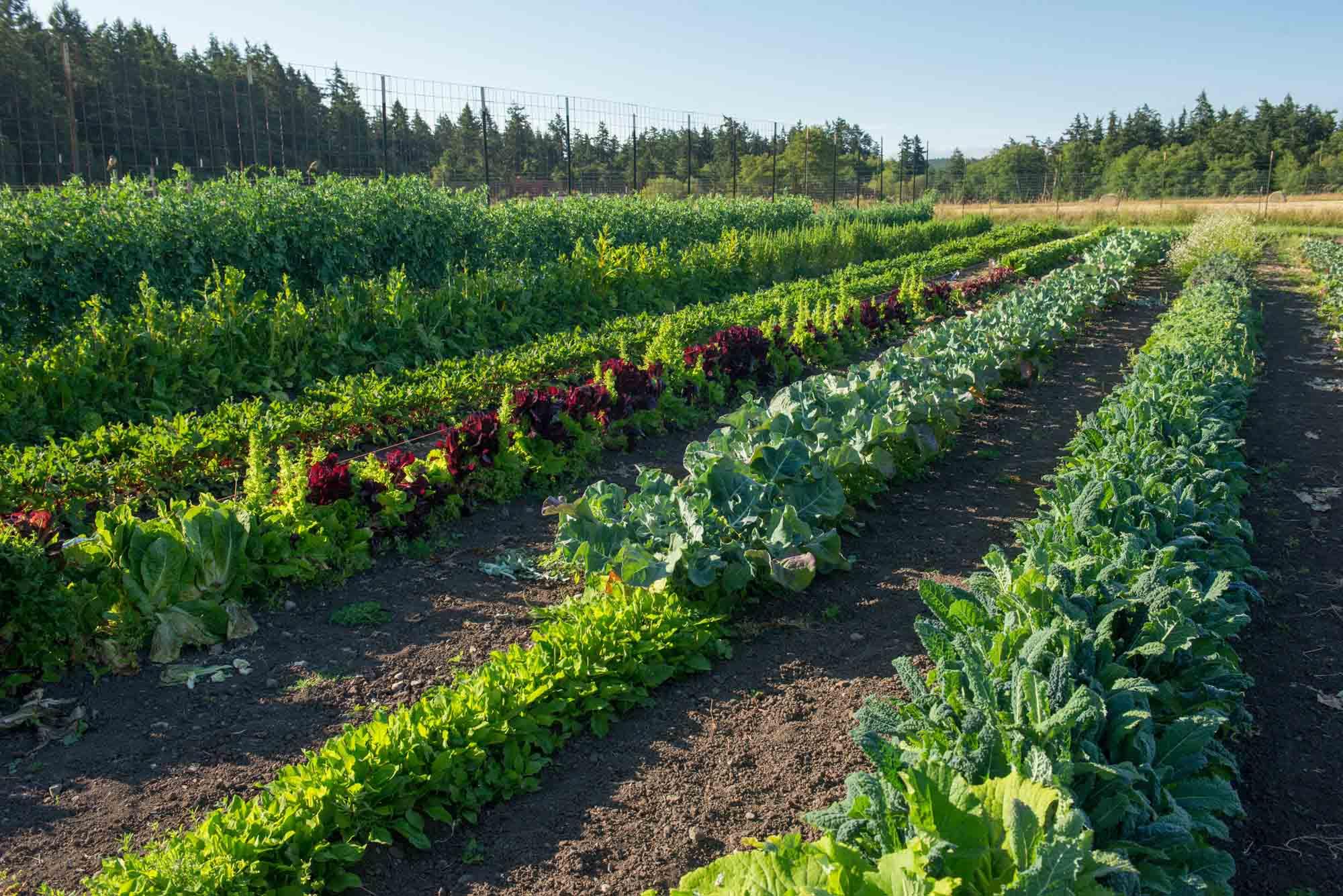 gardening farming vegetables farmers market lopez island