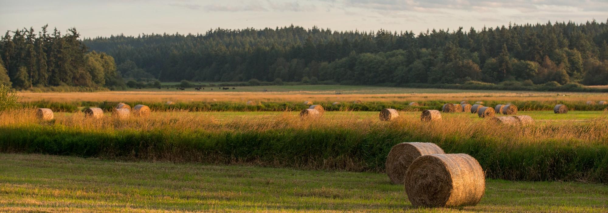 lopez island hay field harvest farm farming pastoral