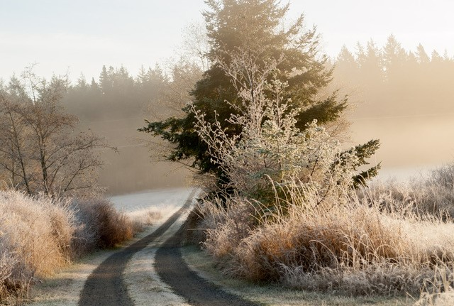 lopez island frost winter snow